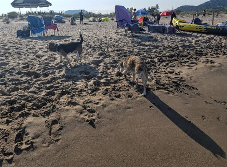 Gossos perros playa estartit