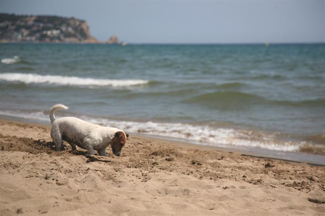 No gossos platja estartit