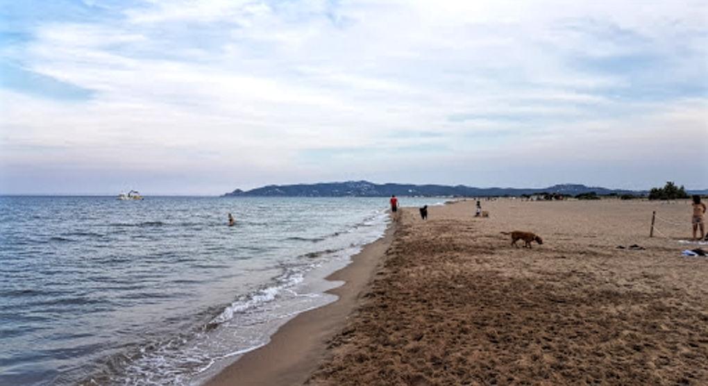 Perros playa gossos platja l estartit